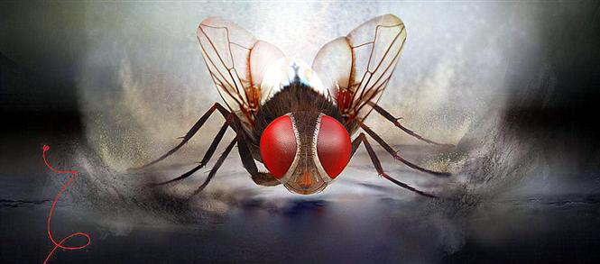 Naan Ee (Eega) - Tamil Movie Review