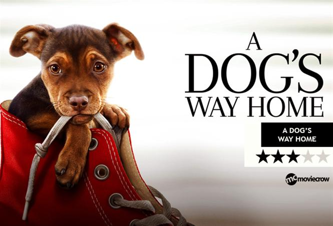 A Dog's Way Home Review - A big treat for those who love paws!